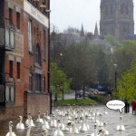 20130716-english-swans-on-the-town