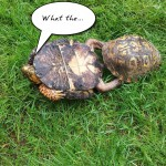 20130716-turtle-love-watch-me
